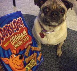 ScoobySnack
