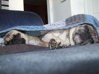 SleepyTwins