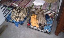 TwoPugs