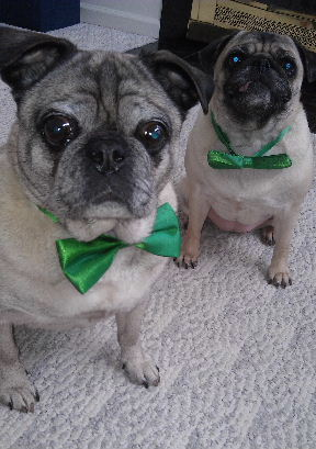 HappyStPattyPugs