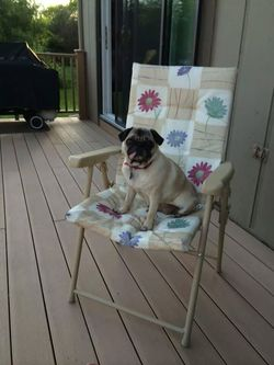PugVacation6