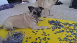 LayingPuzzle