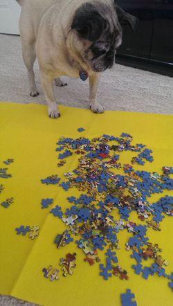 DontEatPuzzle