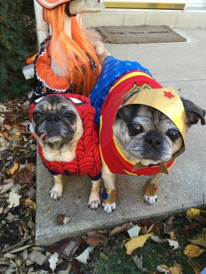 Halloween2015SuperDogs