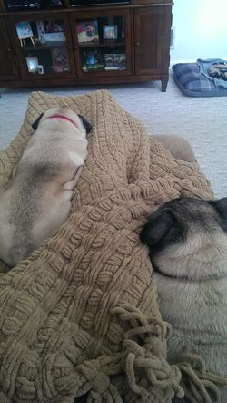 PugCovers
