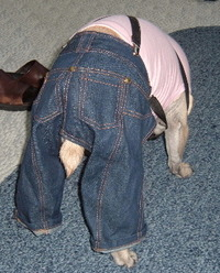Jeansbackend