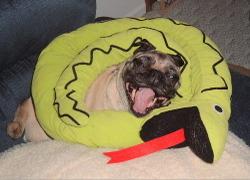 Snakemouth