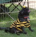 Blackbee2