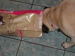 Foodbag3