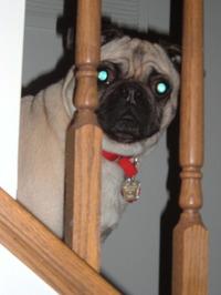 Stairspeek2